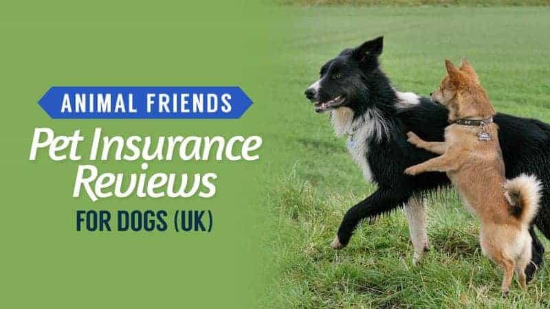 animal friends pet insurance reviews