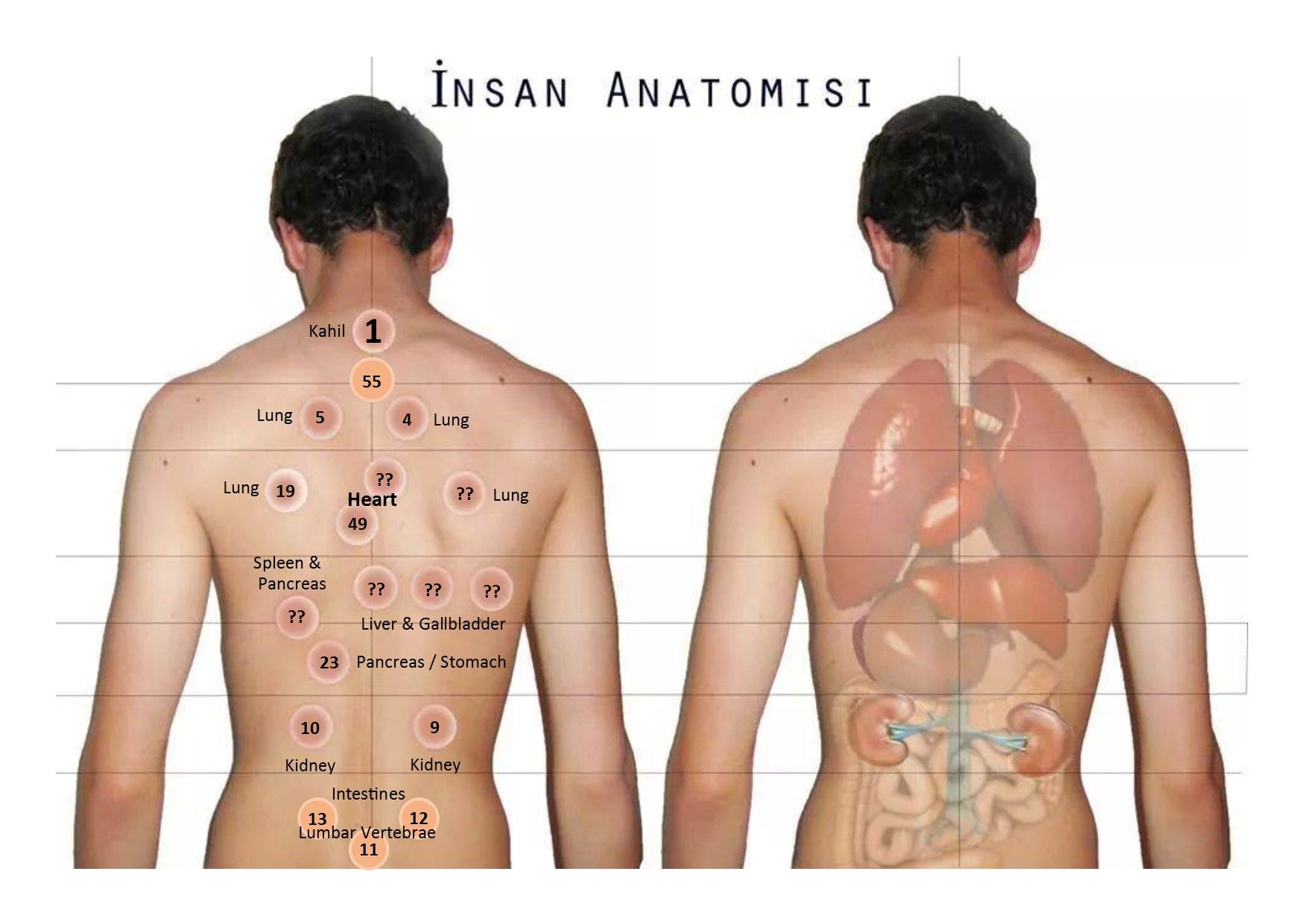 hijama for weight loss reviews